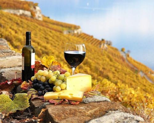 Le terroir des vins de Provence